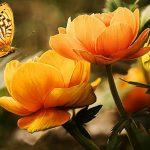 Quis ligula lacinia aliquet mauris ipsum